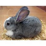 Kaninchen & Hasen